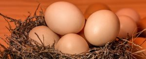 birds nest filled with eggs; blog: How Much Does Egg Freezing Cost?